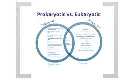 prokaryotic vs eukaryotic venn diagram prokaryotic vs eukaryotic by cardoza on prezi