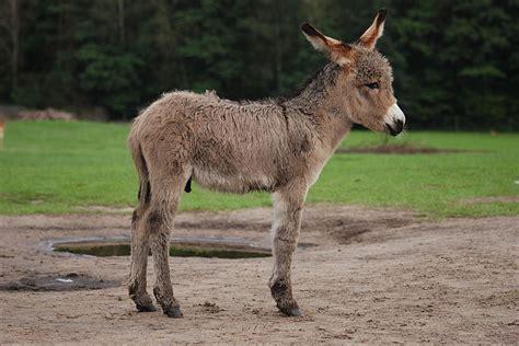 me cojio un burro me voy a comprar un burro espero que no sea muy caro