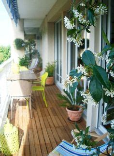 Fleurs Odorantes Pour Balcon by Plantes Odorantes Balcon Fleur De