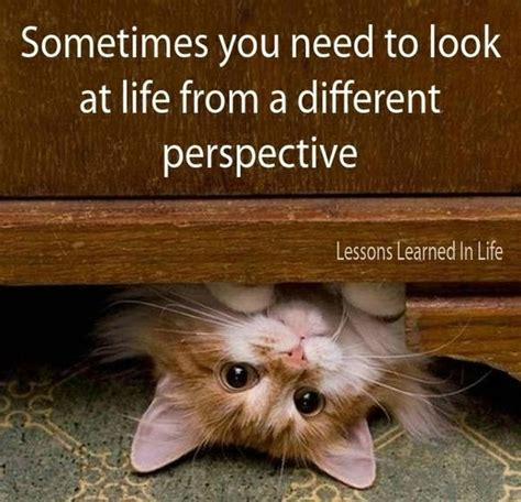 the lincoln chronicles puppy wisdom for happy living books perspective quotes sayings perspective picture quotes