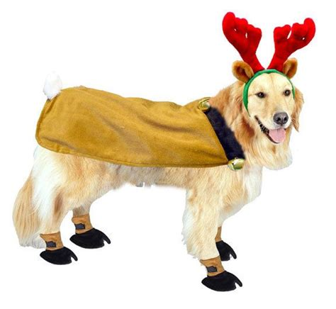 golden retriever costume for baby 86 best golden retrievers in costume images on animals adorable