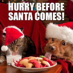 Cute Christmas Meme - funny christmas animals meme