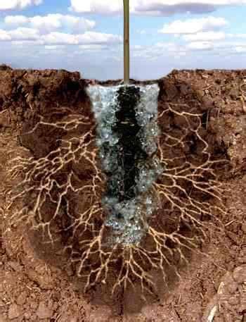 Hidrogel Beautiful Soil Plant hidrogeles el uso de retentores de agua para mejorar la calidad suelo mantemiento jardin