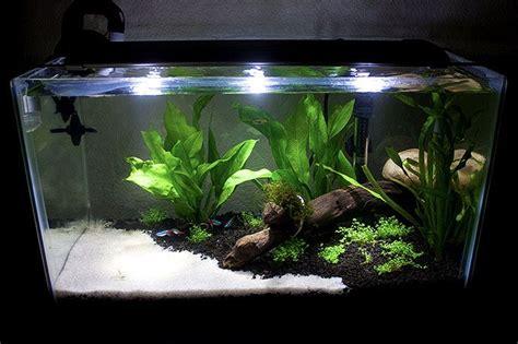 Neon Aquarium Decorations by Aquascaping Neon Tetra Tank Fish Tanks
