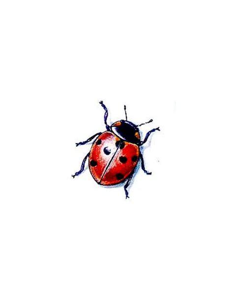 ladybug tattoo design ladybug free design ideas