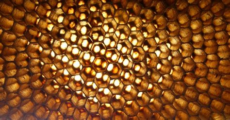patterns in nature honeycomb free photo apis florea hive insect free image on