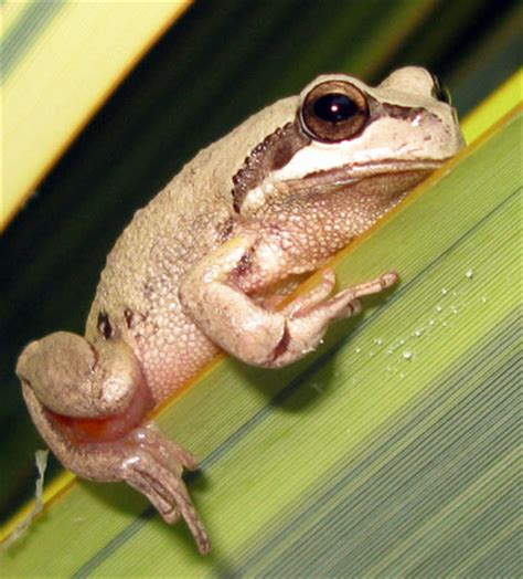 i found a frog in my backyard i found a frog in my backyard 28 images 100 i found a