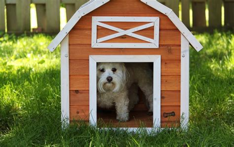where to buy dog houses dog houses now wood dog houses review giveaway