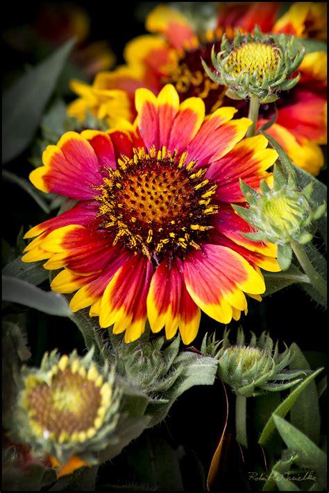 detailed flower