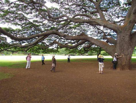 Garden Aiea by Fantastic Hawaii Island Cruise Part 1 Island Of Oahu
