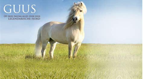 fjord paard fjord paardenrassen nederlandsepaardenblog jouwweb nl