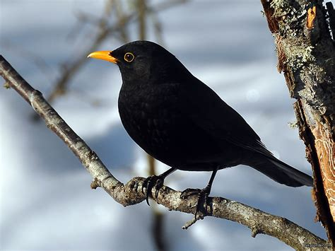 black bird it s a blackbird inspirational storytellers