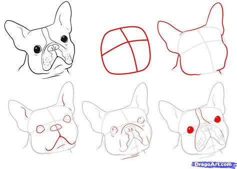 boston terrier coloring pages printable coloring home