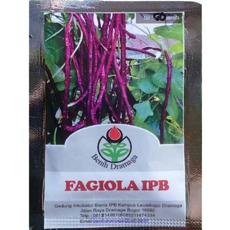 Benih Kacang Merah jual benih kacang panjang ungu merah dari ipb