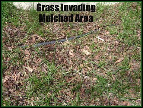 killing grass kill weeds organically green