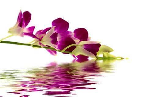 imagenes de flores sobre el agua cuadro rama flores sobre agua 100 a medida
