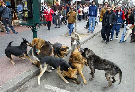 abotonada con un perro noticias de los mundos mundo preocupa a aldf sobrepoblaci 211 n de perros y gatos planeta