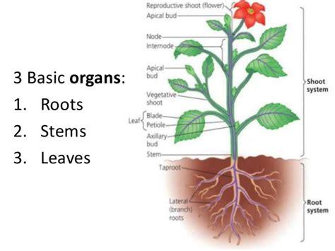 plant reproduction diagram basic flower diagram basic flower shape elsavadorla