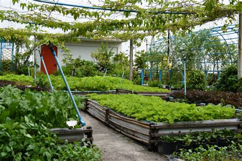 rooftop vegetable gardening rooftop gardening lawn beautification green dhaka