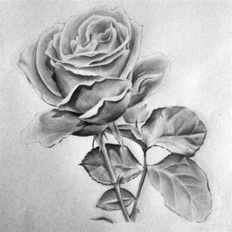 Simply Idea Lukisan U Bingkai 15 gambar sketsa bunga dari pensil yang mudah dibuat