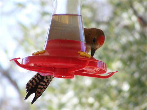 chickadee at the hummingbird feeder birdchick