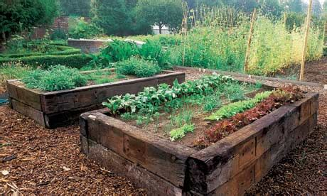 raised veg beds raised beds