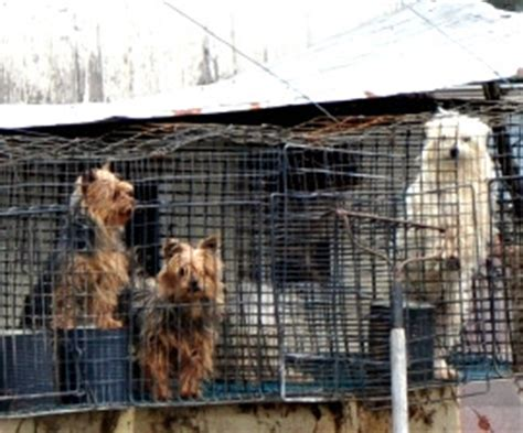 missouri puppy mills missouri governor signs bill to undo prop b amid big ag s efforts to deter animal