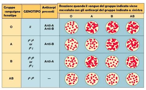 test di sangue il sistema ab0 e le trasfusioni di emazie