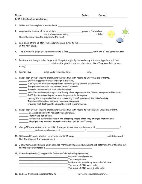 Dna Worksheets by 17 Best Images Of Dna Worksheet Printable Dna Rna