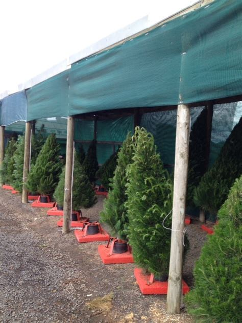 diamond valley christmas tree farm melbourne