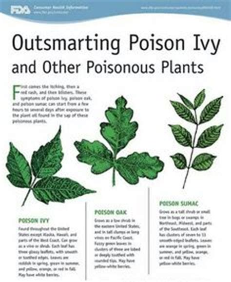 8 Ways To Identify Toxic by 1000 Images About Identify Poisonous Plants On