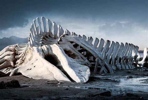 imagenes reales de leviatan leviat 225 n la leyenda de un terrible monstruo marino