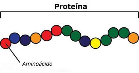 proteinas y aminoacidos alimentos ricos en proteinas guia completa el cosmonauta