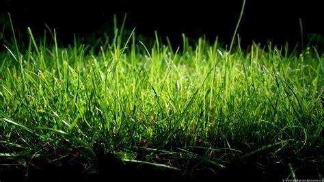 Grass Paper - grass wallpaper grass cloth wallpaper grass paper