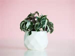 winter indoor plants   winter bugs