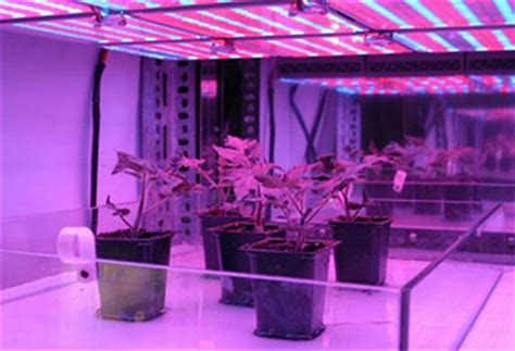 purple light plant growth nasa farming for the future