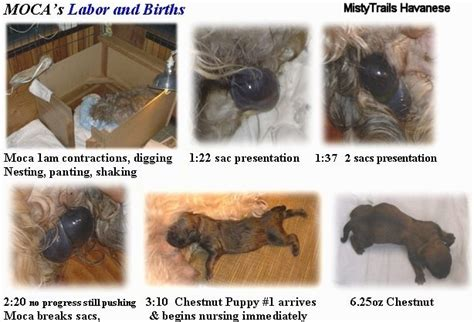 puppies being born information on puppies being born behaviour problems aggression