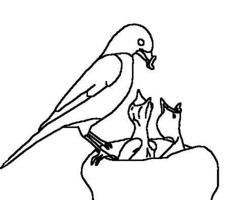 coloring page of a robin bird robin bird colouring pages