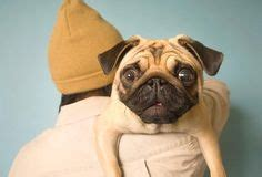 can pugs pop out cats and dogs on cat dogs and eye