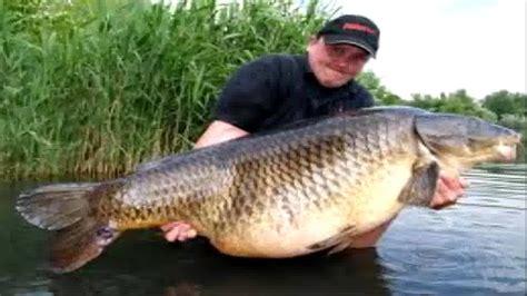 best bait for carp fishing carp baits best carp fishing secret