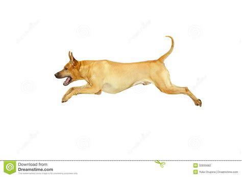 puppy jumping jumping stock photography image 32835682