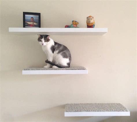 diy floating cat shelves the feline foundation