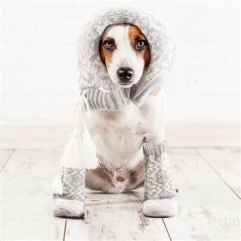 how to keep a dog house warm how to keep dog houses warm during winter paw castle