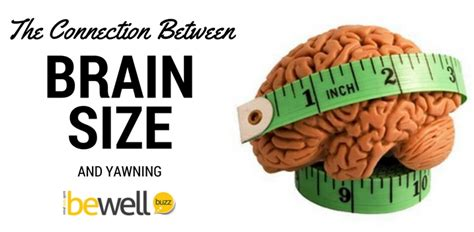brain size a surprising link between yawning and brain size bewellbuzz