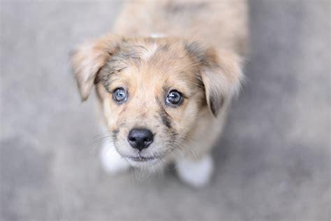 ways  stop  dog  chewing   shouldnt