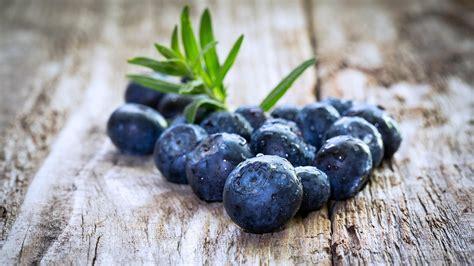 blueberry wallpaper blueberry wallpaper hd 47801 1920x1080 px hdwallsource com