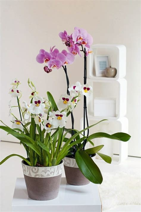 feng shui plants in living room feng shui plants for harmony and positive energy in the living room interior design ideas