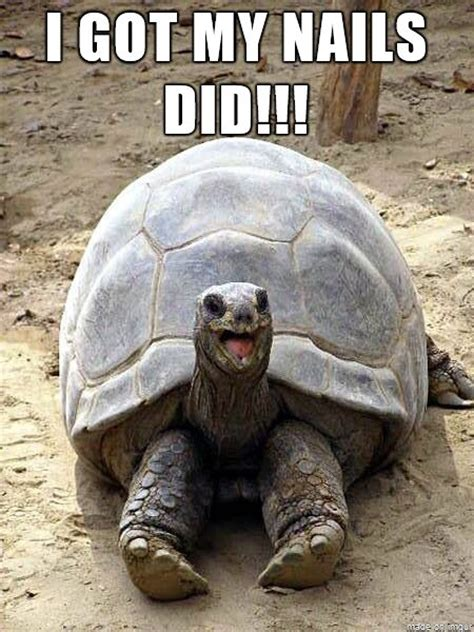 Tortoise Meme - 25 most funny tortoise meme pictures you have ever seen
