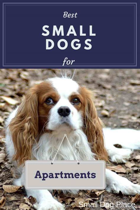 appartment dog best small dogs for apartments
