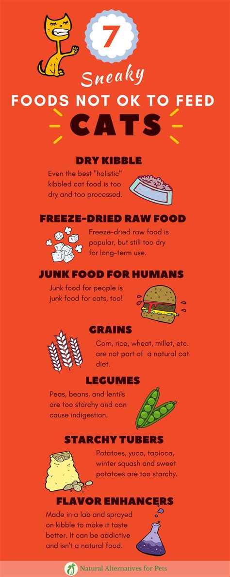 is food bad for cats 277 best cat food images on cat food kittens and diet